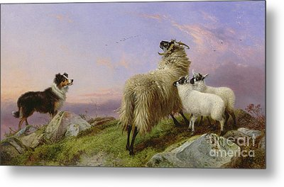 Collie, Ewe And Lambs Metal Print by Richard Ansdell