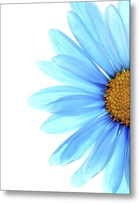 Color Me Blue Metal Print by Rebecca Cozart