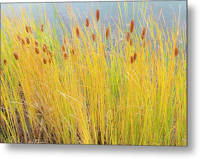 Colorful Autumn Cattails Metal Print by James BO Insogna