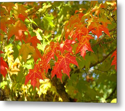 Colorful Fall Leaves Red Nature Landscape Baslee Troutman Metal Print by Baslee Troutman