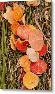 Colorful Fallen Aspen Leaves During Autumn Metal Print by Vishwanath Bhat