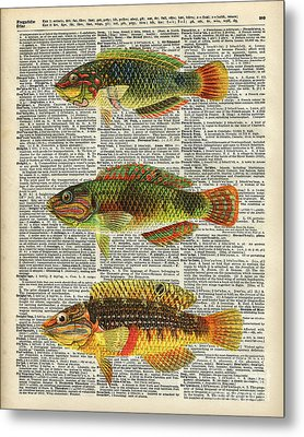 Colorful Fishes Metal Print by Jacob Kuch