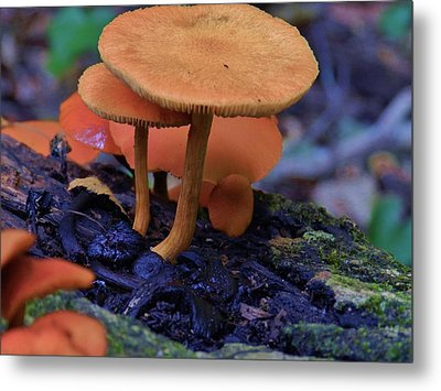 Colorful Mushrooms Metal Print by Robert Ulmer