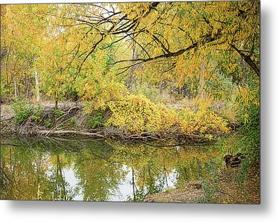 Colorful Stream Banks Reflections Metal Print by James BO Insogna