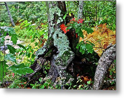 Colorful Stump Metal Print by Diana Hatcher