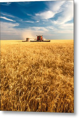Combines Cutting Wheat Metal Print by Todd Klassy