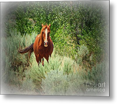 Copper Beauty Metal Print by Bobbee Rickard