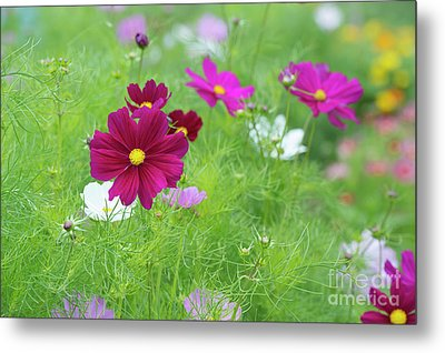 Cosmos Color Metal Print by Tim Gainey