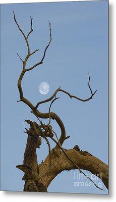 Cotton Moon Metal Print by Sophie De Roumanie