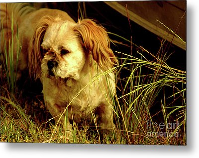 Country Life Metal Print by Cassandra Buckley