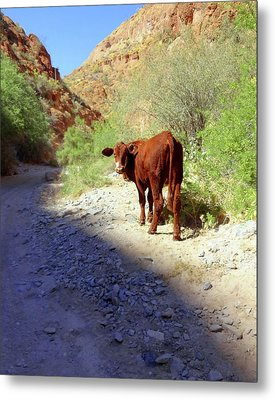 Cow In The Canyon Metal Print by Susan Lafleur