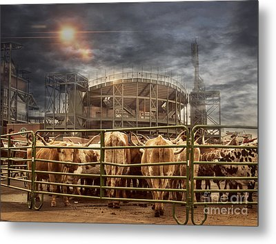 Cow Town Metal Print by Juli Scalzi