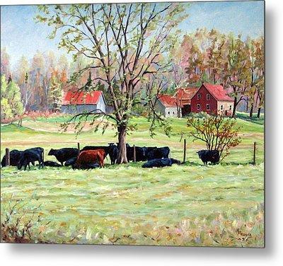 Cows Grazing In One Field  Metal Print by Richard T Pranke