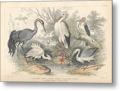 Cranes Metal Print by Oliver Goldsmith