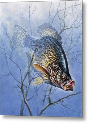Crappie Cover Tangle Metal Print by JQ Licensing