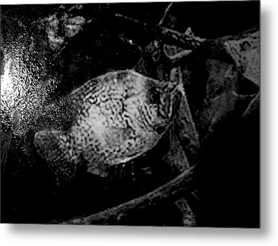 Crappie In Cover Metal Print by Robert Cunningham