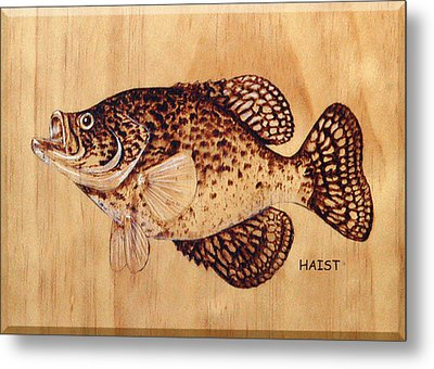 Crappie Metal Print by Ron Haist