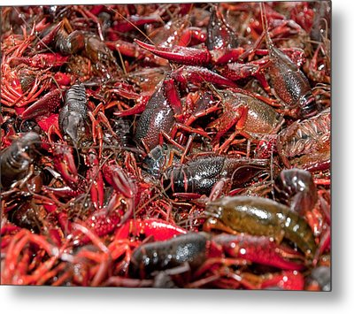 Crawfish Metal Print by Jim DeLillo