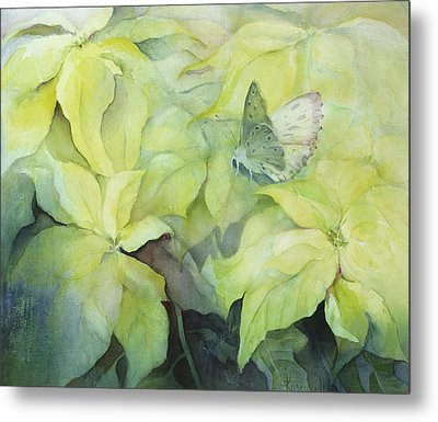 Cream Poinsettia With Butterfly Metal Print by Karen Armitage