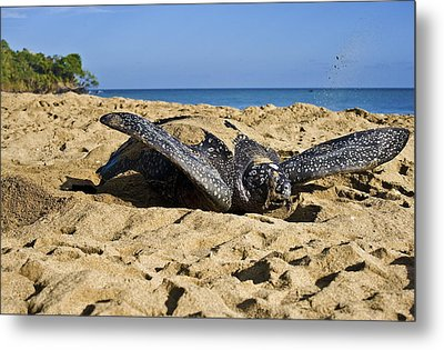 Creating Camouflage  Metal Print by Sarita Rampersad