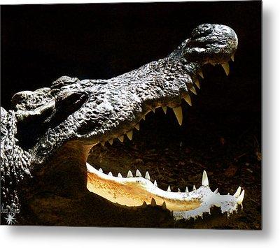 Crocodile Metal Print by Scott Hovind