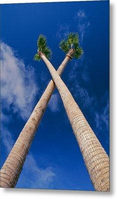 Crossed Palm Trees Metal Print by Rich Iwasaki