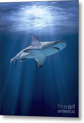Cruising Shark Metal Print by Liz Molnar