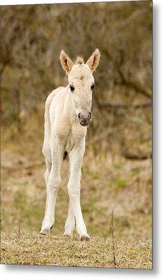 Cute Baby Horse Metal Print by Roeselien Raimond