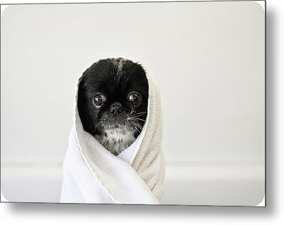 Cute Dog Wrapped Metal Print by Emma Mayfield Photography