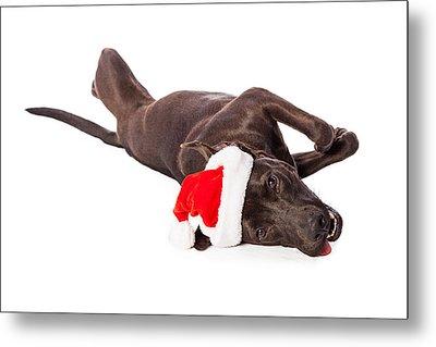 Cute Labrador Dog Laying Wearing Santa Hat  Metal Print by Susan Schmitz