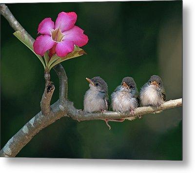 Cute Small Birds Metal Print by Photowork by Sijanto