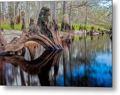 Cypress Knee In Fisheating Creek Metal Print by Andres Leon