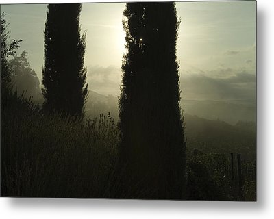 Cypress Trees Looming In Front Metal Print by Todd Gipstein