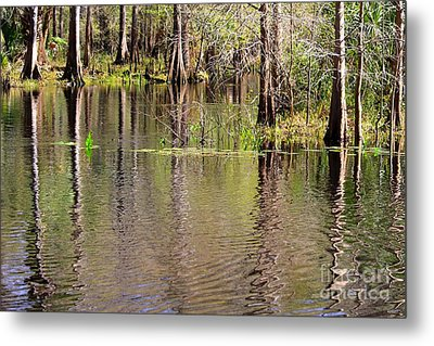 Cypresses Reflection Metal Print by Carol Groenen