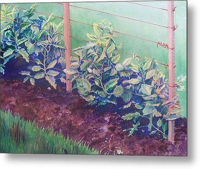 Daddy's Bean Row Metal Print by Tina Farney