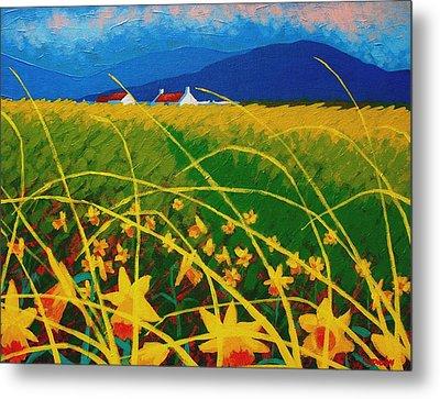 Daffodil Landscape Metal Print by John  Nolan