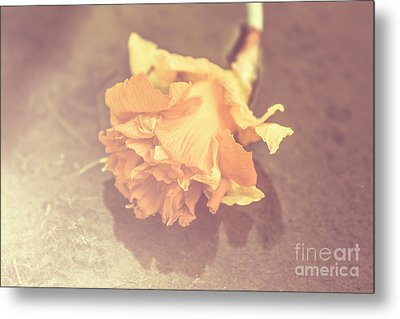 Daffodil Reflections  Metal Print by Jorgo Photography - Wall Art Gallery