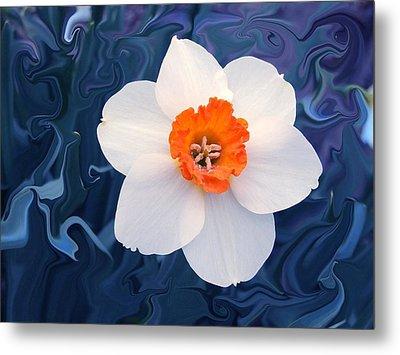 Daffodill In Blue Metal Print by Jim  Darnall