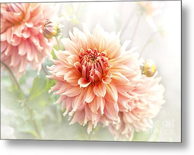Dahlia 'fairway Spur' Metal Print by Jacky Parker