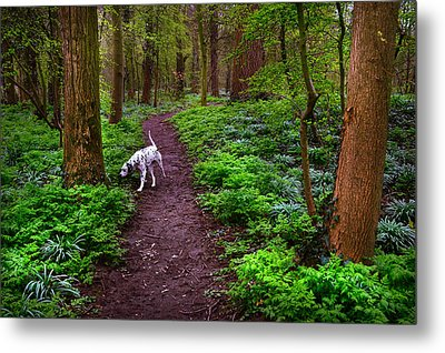 Dalmatian In The Spring Woods Metal Print by Jenny Rainbow