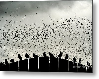 Dance Of The Migration Metal Print by Jan Piller