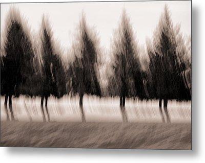 Dancing Pines Metal Print by Carol Leigh