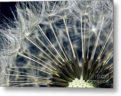 Dandelion Seed Head Metal Print by Ryan Kelly