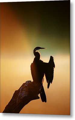 Darter Bird With Misty Sunrise Metal Print by Johan Swanepoel