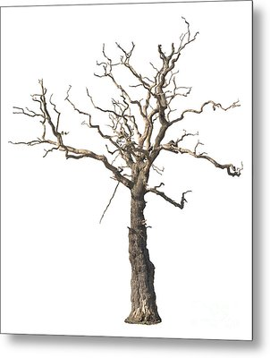 Dead Tree Metal Print by Amanda And Christopher Elwell