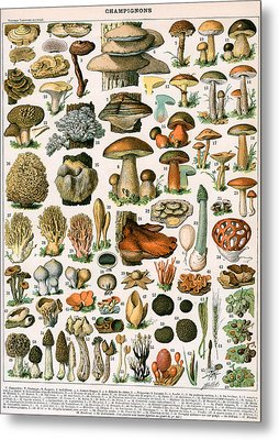 Decorative Print Of Champignons By Demoulin Metal Print by American School