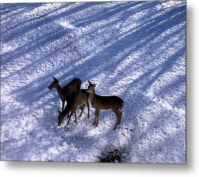 Deer In The Snow Metal Print by Josephine W