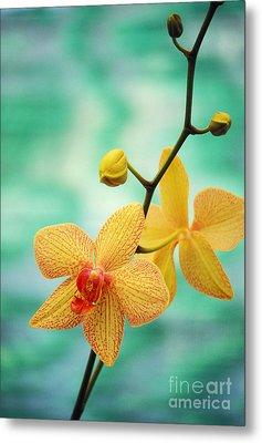 Dendrobium Metal Print by Allan Seiden - Printscapes