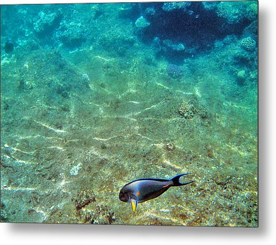 Depth. The Yellow Fin. Metal Print by Andy Za