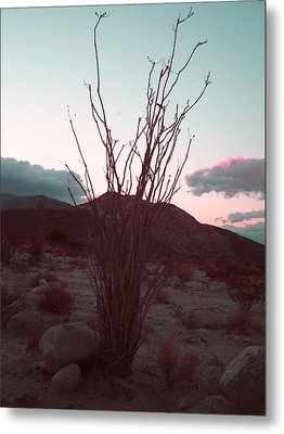 Desert Plant And Sunset Metal Print by Naxart Studio